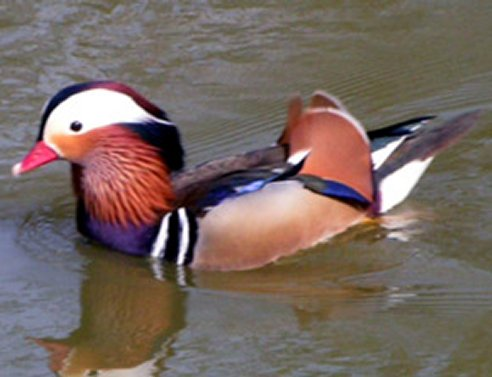 Canards de surface